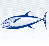 Sgombro blu dell'aletta Fotografia Stock Libera da Diritti
