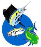 Sgombro dei pesci del delfino di mahi del pesce vela del Pacifico illustrazione vettoriale