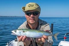 Sgombro di pesca Fotografia Stock