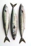 Sgombro Fische getrennt auf Weiß Stockfotografie