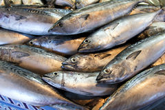Sgombro fresco al servizio di pesci Immagine Stock