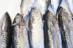 Sgombro fresco al servizio di pesci Fine in su Immagine Stock Libera da Diritti