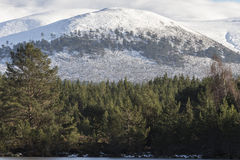 Sgor Gaoithe mountain at Glen Feshie in the Cairngorms National Park. Stock Images