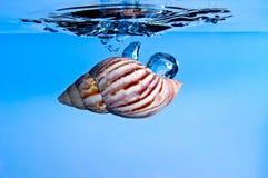 Sgrani la goccia nell'acqua Fotografie Stock Libere da Diritti