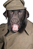 Sgt Boo Shouting his Orders! Stock Photos