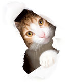Sguardi fissi del gatto attraverso un foro in carta
