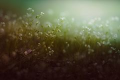 Sguardo d'annata del fondo dei fiori Fotografia Stock
