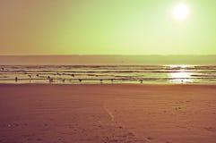 Sguardo d'annata della spiaggia dell'oceano Fotografia Stock