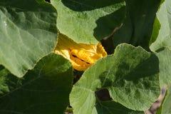 Sguardo da vicino nelle piante di verdure su un giardino del cottage fotografia stock libera da diritti