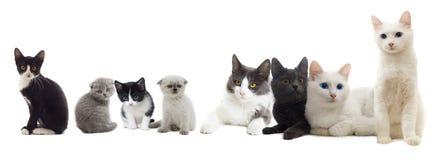 Sguardo dei gatti Fotografie Stock Libere da Diritti