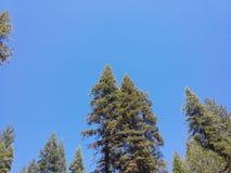 Sguardo del cielo della foresta degli alberi del ` s del cielo blu Fotografia Stock Libera da Diritti
