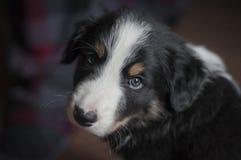 Sguardo del cucciolo immagini stock