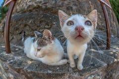 Sguardo del fisheye del gatto Fotografia Stock