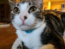 Sguardo del gattino Fotografia Stock