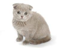 Sguardo del gattino su voi Immagini Stock Libere da Diritti