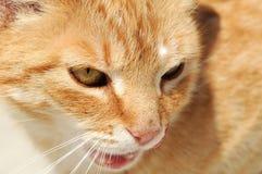sguardo del gatto Fotografie Stock Libere da Diritti