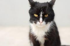 sguardo del gatto Immagine Stock Libera da Diritti
