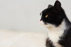 sguardo del gatto Immagini Stock Libere da Diritti