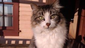 sguardo del gatto Immagini Stock