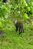 Sguardo del gatto del gattino indietro Fotografia Stock Libera da Diritti