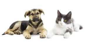 Sguardo del gatto e del cane Immagini Stock Libere da Diritti