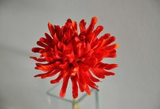 Sguardo del primo piano al fiore di plastica rosso nel vaze di vetro Immagine Stock