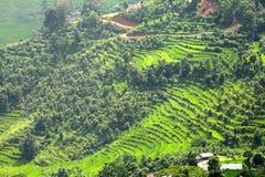 Sguardo della chiusura dei terrazzi verdi in valle di Pokhara Immagine Stock Libera da Diritti