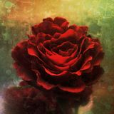 Sguardo della pittura della rosa rossa Immagini Stock Libere da Diritti
