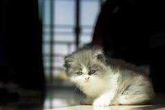 Sguardo di BabyCat Immagine Stock