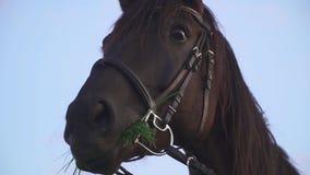 Sguardo divertente di un cavallo nella macchina fotografica archivi video