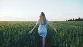 Sguardo posteriore della ragazza che cammina in un campo verde di giovane grano 4K archivi video