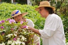 Sguardo senior delle coppie ai fiori del rododendro Immagini Stock