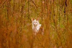 Sguardo solo sveglio del gatto Fotografia Stock