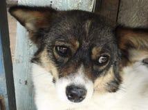 Sguardo triste del cane fotografia stock