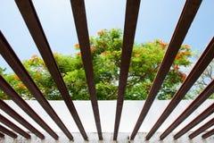 Sguardo tropicale fresco tramite la cortina di ferro, bello orgoglio delle Barbados, nano Poinciana, recinto del fiore, cresta di fotografia stock libera da diritti