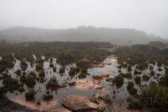 Sguazzi in roccia rosa con la flora endemica strana Fotografia Stock