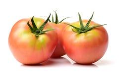 Sh tomatofre. Isolated on white background stock image