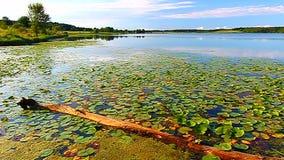 Shabbona sjödelstatspark Illinois stock video