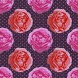 Shabby κομψό άνευ ραφής σχέδιο Διανυσματικά εκλεκτής ποιότητας τριαντάφυλλα Στοκ φωτογραφίες με δικαίωμα ελεύθερης χρήσης
