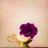 Shabby Chic Background with petunia in an antique cup Royalty Free Stock Photography