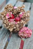 Shabby chic Easter nest. Three dyed red eggs in a nest made of dried pink hydrangea leaves on a vintage blue bench stock photos