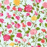 Shabby chic rose background Royalty Free Stock Image