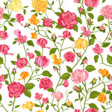 Shabby chic rose background Stock Photography