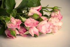 Shabby Chic Roses Royalty Free Stock Photo
