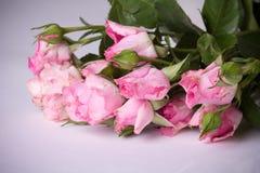 Shabby Chic Roses Stock Photo