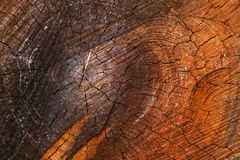 Shabby cut tree trunk. Scored surface texture background Royalty Free Stock Images
