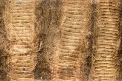 Shabby snakeskin. Texture of an old, shabby snakeskin for background Royalty Free Stock Photo