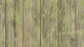 Shabby wooden boards green gray colored Stock Photos