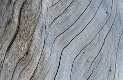 Shabby wooden texture close-up photo. Cold grey wood background. White old tree near the sea. Curves and cracks on rustic timber. Rough timber texture. Sea Royalty Free Stock Images