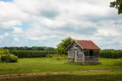 Shack in the Corn Royalty Free Stock Photography